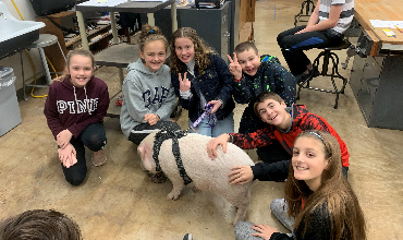 pig with students around him