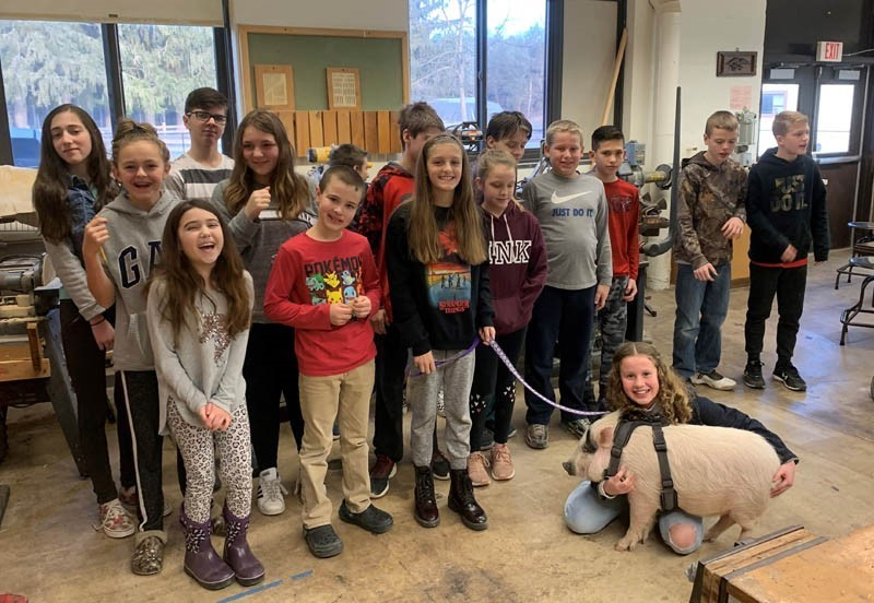 Potbelly pig in a classroom with students
